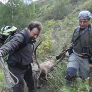 Rececho de un venado en un coto de Asturias