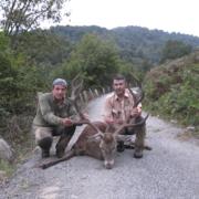 Venado caza mayor Asturias