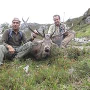 Rececho de venado en un coto de caza en Piloña