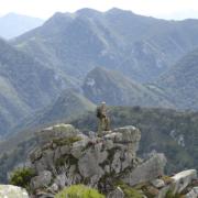 Reserva de Caza en Asturias