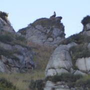 Rebeco y venada en reserva de caza en Piloña, Asturias