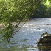 Pesca de salmón en el Narcea, Asturias