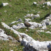 Caza menor en Asturias