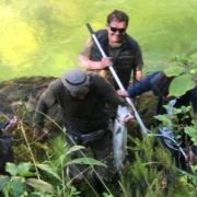 Salmón recien pescado en el Río Cares, Asturias