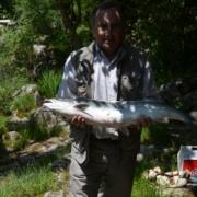 Salmón recien pescado en el Sella